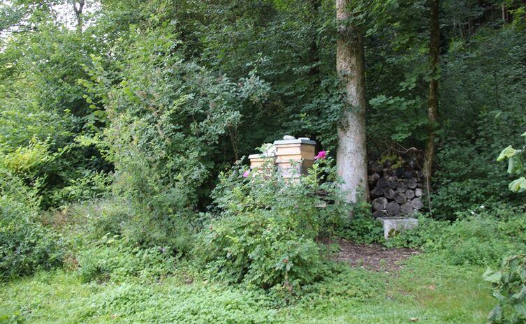 Bienensterben4