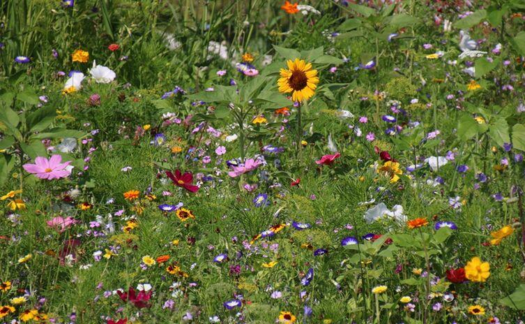 Maßnahmen gegen Bienensterben