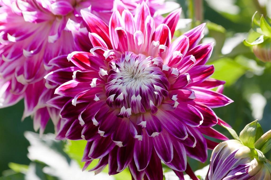 Blumenschmuckwettbewerb 2021