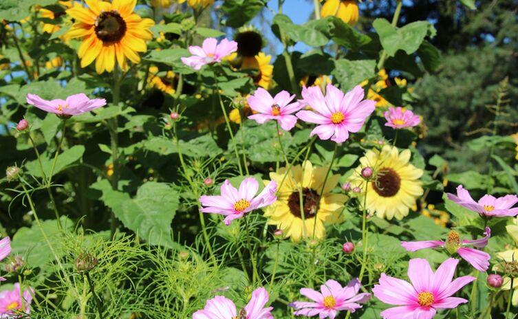 Blumenmeer am Pulverturm